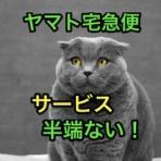 マサキさんがやってみたブログ