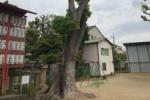 ここにもあった『指定樹林』〜私部の住吉神社の双幹クスノキ〜