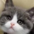 新入り子ネコと白いモフモフは仲良くできるかな? こんにちは~♪ → 心配はないようです… 【サモエド】