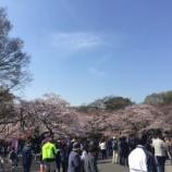 『お花見 上野公園 人凄すぎる、、』の画像