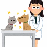 『ペットと暮らすことになったらペットも保険に入っておこう』の画像