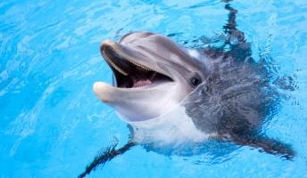 飼育下のイルカは「幸せ」? 科学者が調査