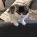 子ネコがソファの隅にいた。こっちに来たいようだ。にゃ~ん! → こうなる…
