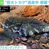 『岡山市トカゲ放し飼いで脱走した飼い主を5chが特定』の画像