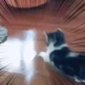【子ネコ】 床をモップで拭いていた。これはお掃除が捗るぞ! → 子猫先生はこうなります…