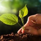 『「アナスタシア農法」って知っている?  - 地球と愛で繋がる  』の画像
