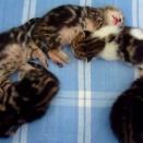 【ねこ】「匣の中には綺麗な猫がぴったり入ってゐた」段ボールの中にいた猫の美しさにひどく羨ましくなる