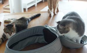 """""""リュック式猫ハウス""""にネコたちの反応"""