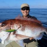 『8月 2日 釣果 スーパーライトジギング 初のSLJマダイ3匹キャッチ!! そこら中魚達が乱舞していました。 』の画像