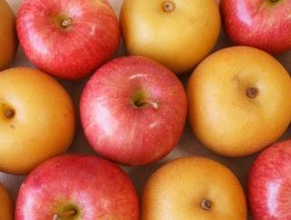 【徹底討論】りんご派 VS 梨派