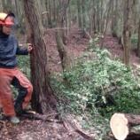 『木を切る仕事』の画像
