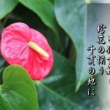 『珍花』の画像