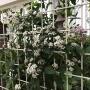 *今日の花とコスモス•散歩道の花が〜( ;∀;)
