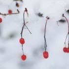 『初積雪』の画像