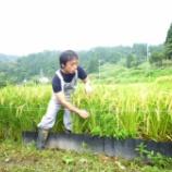 『稲刈り体験会の写真をプロカメラマンの水野さんからいただきました』の画像