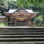 『京羅木山に咲くコアジサイ』の画像
