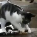 【子ネコ】 ホースから水が出ていた。何とかしなければ! → 子猫はこうする…