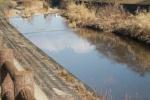 幸せの青い鳥見つけた!?交野市内を流れる一級河川「天の川」を散策してたら皆が注目
