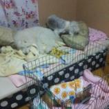 『私の寝床が、、、』の画像