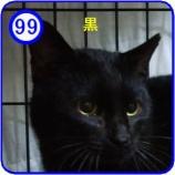 『里親募集【小次郎】99』の画像