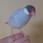 Keikoと小鳥日記