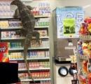 【画像】セブンイレブンに行ったらトカゲがいた