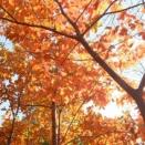 紅葉もそろそろ終わり!