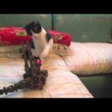 子猫のハナ VS ゾイド2  ~ハナの逆襲猫パンチ~の写真