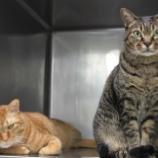 『当院の輸血猫たち』の画像