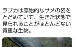 朝日新聞、水族館の「生きた化石」の深海のサメにフラッシュを炊いてしまう。→その後死亡