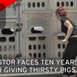 『喉が渇いた豚に水をあげた女性が懲役刑の可能性』の画像