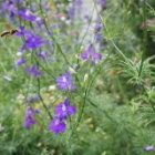 『危険生物だけど子煩悩で働き者のアシナガバチは庭の見張り番』の画像