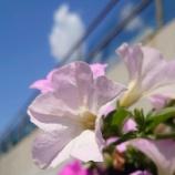 『晴れの休日2! @ Xperia5』の画像