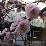 『春がそこまで!』の画像