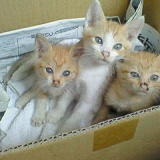 猫の里親募集のサムネイル
