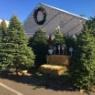 観葉植物の水やりに良い方法+クリスマスツリーは生木?