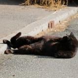 『ノルマンディーファームの看板猫』の画像
