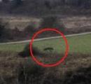 北ウェールズの超巨大黒猫騒動、ついに渦中のケモノの撮影に成功す!