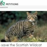 『絶滅に瀕するスコティッシュワイルドキャットを救う署名』の画像