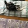 猫用の大きなクッションをいただきました~♪