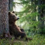 『男「最近熊の出没多いよな」女「ホントね」熊「怖いですよね」』の画像
