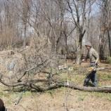 『また春の嵐・ソルダムの薪』の画像