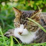 『【写真】 中山の猫! ~猫たちの宴~』の画像