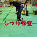 『【しつけ教室】次回の開催日は5月14日「ムダ吠えは原因が分かれば減らせる!」』の画像