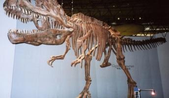 ティラノサウルスが最強の恐竜だと思ってる奴wwwwwwwwwww