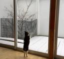 【画像】 ネコ「外は真っ白だニャー、外出せ!外出せ!」 ⇒