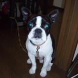 『愛犬・BOSH奮闘記』の画像
