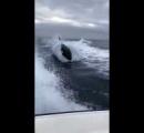 ボートにアシカが避難→シャチに取り囲まれた女性がアシカを追い出す→叩かれる