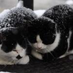 この時期の野良猫って寒さで死なないんか?