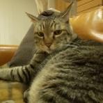 猫の昼寝代行屋